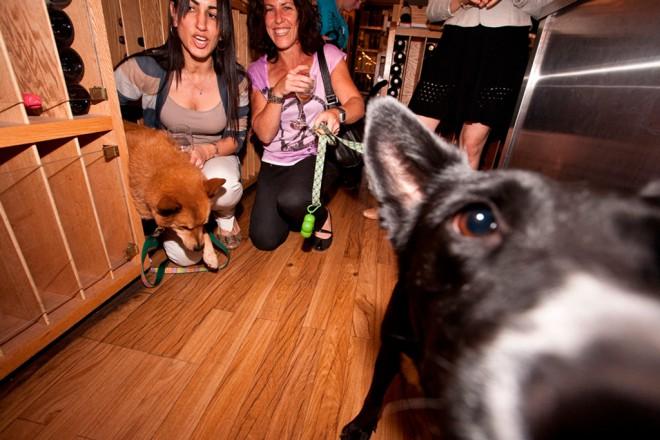 Dog Wine 1
