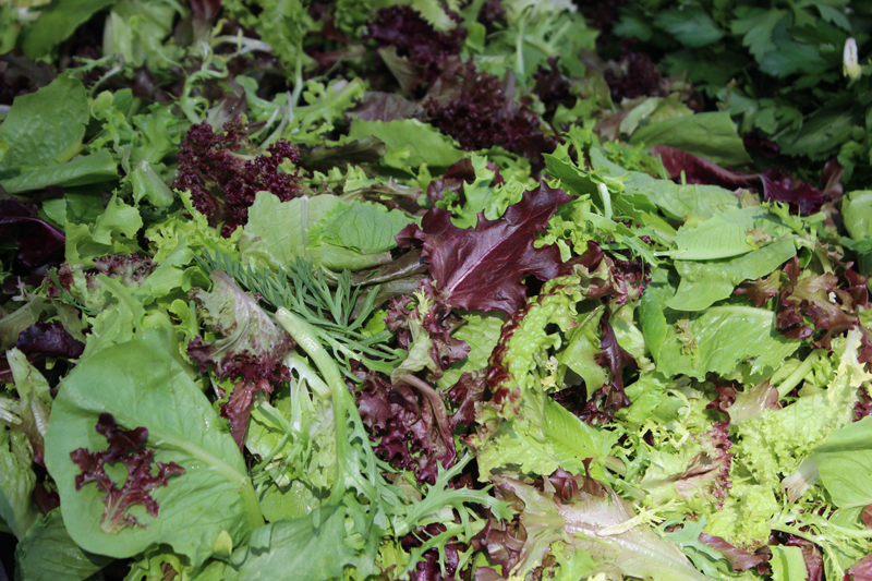 Mixed Salad Greens from S & SO Produce Farms