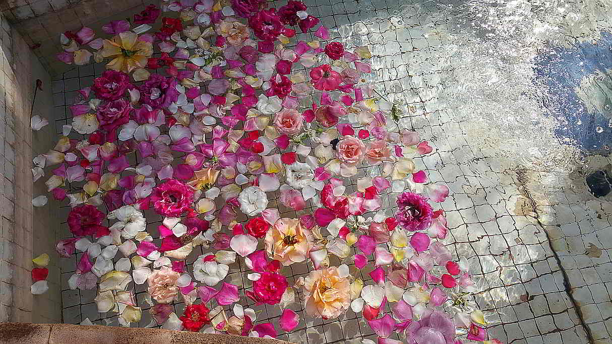 Flower petals floating in a pool. Marrakesh. 2017