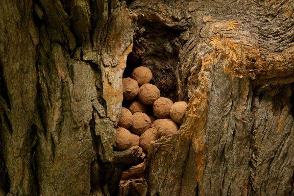 Chocolate Scotch Truffles by Chef Genevieve Meli. Photo by Battman. Sweet Nature cookbook, ebook, 2016.