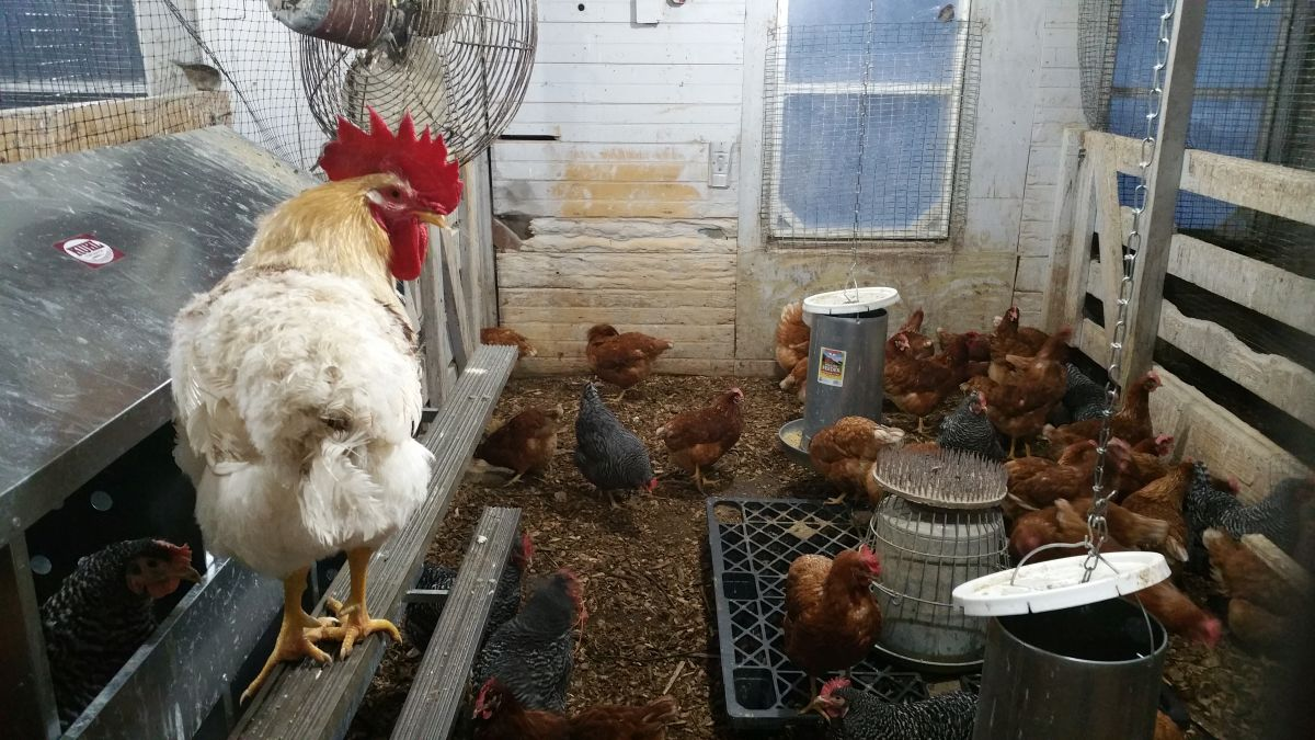 Chicken coup at Wilson Farms.