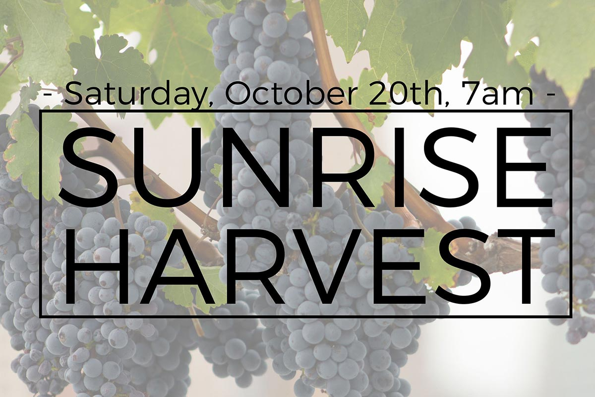 Sunrise Harvest